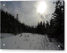 Winter Woods Acrylic Print by Eric Workman