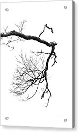 Acrylic Print featuring the photograph Wintered Over by Skip Willits