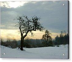 Wintergloom Acrylic Print by Barbara  White