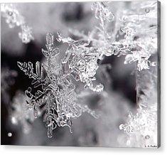 Winter's Beauty Acrylic Print