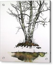 Winters Birch Acrylic Print by Carolyn Doe