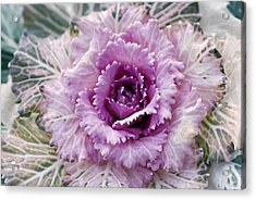 Winters Blush Acrylic Print by Don  Wright
