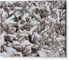 Winter's Contrast Acrylic Print by Carol Groenen