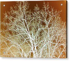 Winter's Dance Acrylic Print