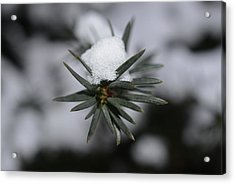 Winter's Grip Acrylic Print