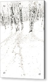 Acrylic Print featuring the photograph Winter's Shadows by The Forests Edge Photography - Diane Sandoval
