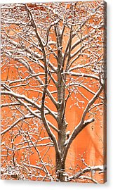 Winter's Touch Acrylic Print by Carl Amoth