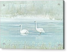 Acrylic Print featuring the photograph Trumpeter Swan's Winter Rest Blue by Jennie Marie Schell