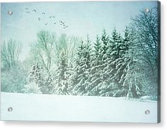 Winter's Watch Acrylic Print