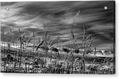 Acrylic Print featuring the photograph Winters Wheat by Al Swasey