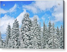 Winterscape Acrylic Print by Jeff Kolker