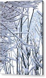 Wintertide Acrylic Print