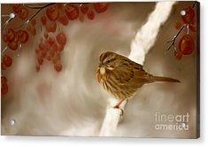 Wintertime Sparrow Acrylic Print