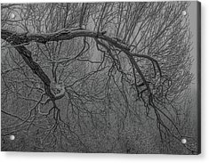 Wintery Tree Acrylic Print