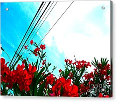 Wire Flowers Acrylic Print by Chuck Taylor