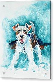 Wire Fox Terrier Acrylic Print