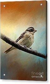 Wisconsin Songbird Acrylic Print