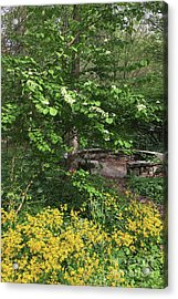 Acrylic Print featuring the photograph Wisdom Circle by Chris Scroggins