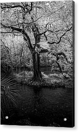 Wisdom Of A Tree Acrylic Print by Marvin Spates