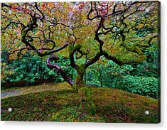 Wisdom Tree Acrylic Print by Jonathan Davison