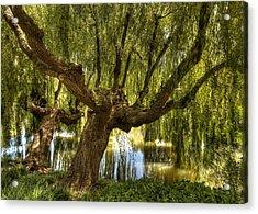 Wisdom Willow Acrylic Print