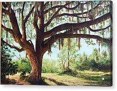 Wise Old Oak Acrylic Print