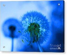 Wish Away The Blues Acrylic Print by Valerie Fuqua