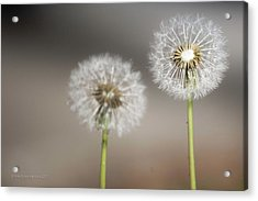 Acrylic Print featuring the photograph Wish On Me by Lora Lee Chapman