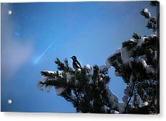 Wish Upon A Shooting Star Acrylic Print