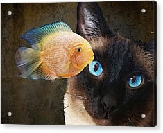 Acrylic Print featuring the painting Wishful Thinking 2 - Siamese Cat Art - Sharon Cummings by Sharon Cummings