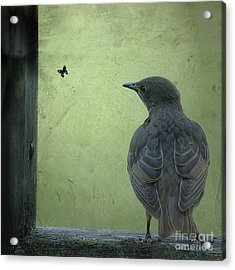 Acrylic Print featuring the photograph Wishful Thinking by Jan Piller