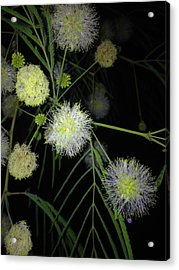 Wishing On A Star Acrylic Print