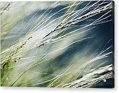 Wispy Grass Acrylic Print by Ray Laskowitz - Printscapes