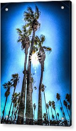Acrylic Print featuring the photograph Wispy Palms by T Brian Jones