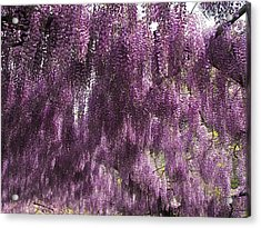 Wisteria Arbor At The Bardini Gardens Acrylic Print by Gerald Hiam