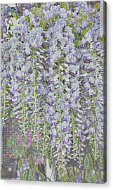 Acrylic Print featuring the photograph Wisteria Before The Hail by Nareeta Martin