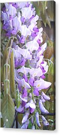 Wisteria Acrylic Print by Jean Booth