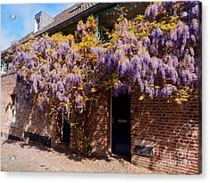 Wisteria Over A Doorway In Old Town Maastricht Netherlands Acrylic Print