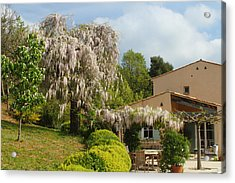 Acrylic Print featuring the photograph Wisteria by Richard Patmore