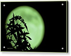 Acrylic Print featuring the photograph Witching Hour by DigiArt Diaries by Vicky B Fuller