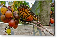 With The Grape Acrylic Print by PJ  Cloud
