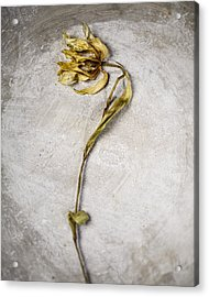 Withered Acrylic Print