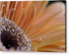 Within Nature Acrylic Print by Patricia M Shanahan