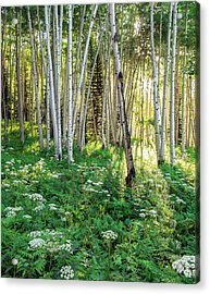 Acrylic Print featuring the photograph Within The Forest Deep by Tim Reaves