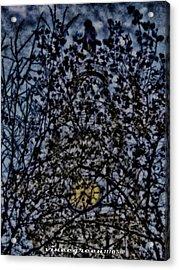 Wm Penn's Woods Acrylic Print
