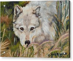 Wolf Among Foxtails Acrylic Print
