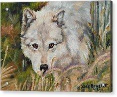 Wolf Among Foxtails Acrylic Print by Lori Brackett