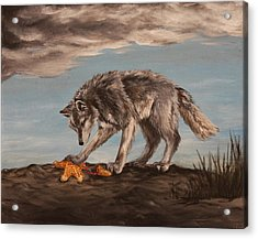 Wolf And Sea Star Acrylic Print