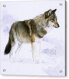 Wolf Acrylic Print