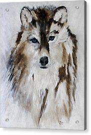 Wolf - Blue Star Acrylic Print by Barbie Batson